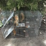 Squirrel Animal Removal Indianpolis, IN