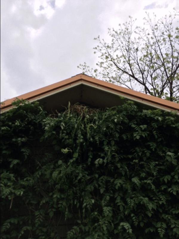 Hidden Squirrel Entrance