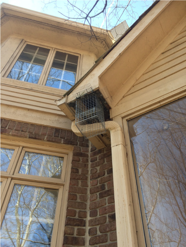 Raccoon-Exclusion-Noblesville-attic-animal-waste-Indiana2
