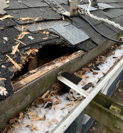 Wildlife-hole-break-IN-Removal-indianapolis2
